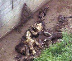 Bodies of victims killed by the Albanian Islamist Nazi KLA (UCK) - commanded by Ramush Haradinaj -and thrown into the Radonjic Lake canal in Glodjane, Kosovo in 1998.